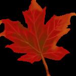 Je veux travailler au Canada, comment m'y prendre ?